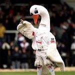 Cyril the Swan - Swansea City mascot